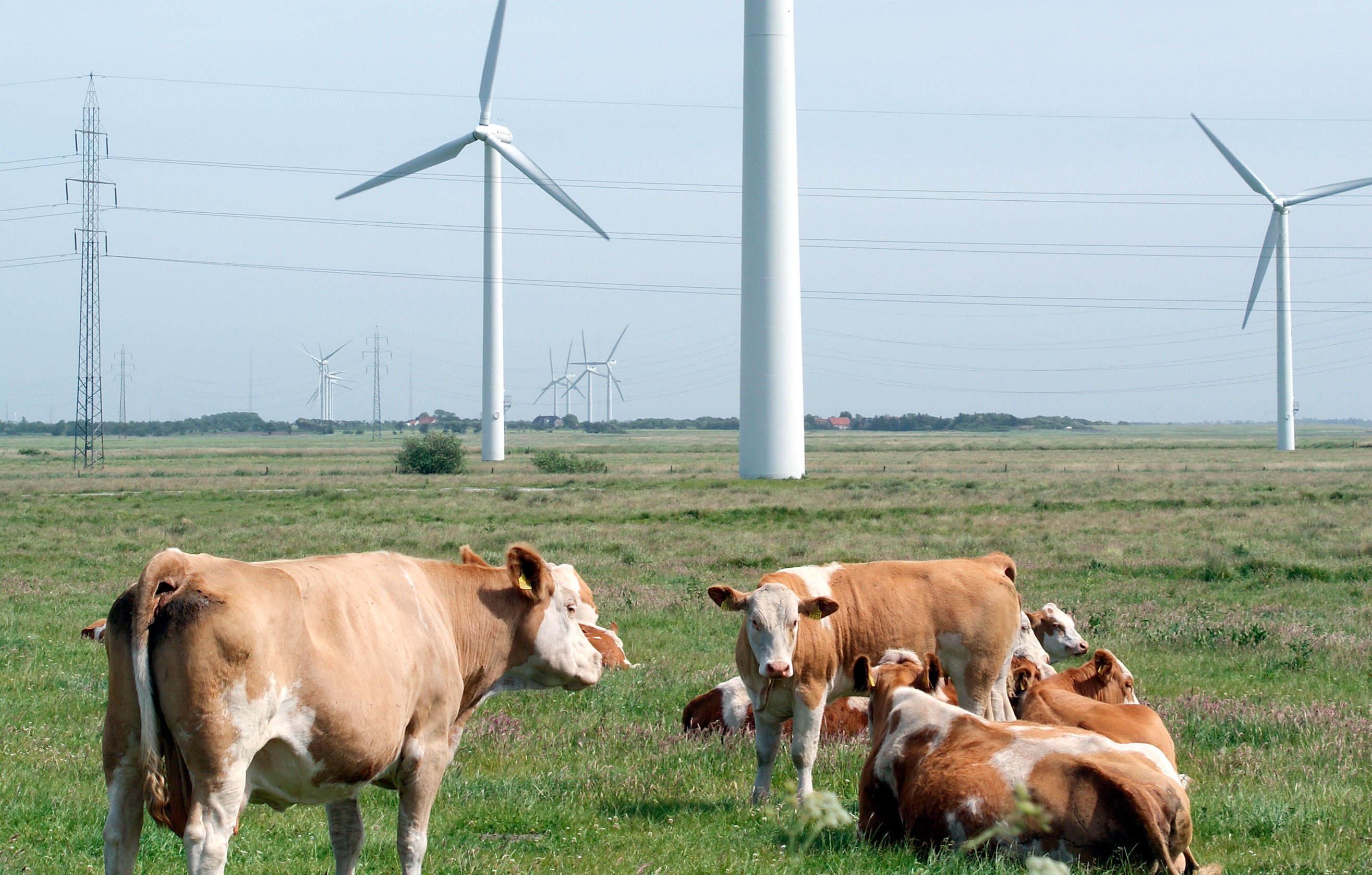 Store vindmøller i Rebild Kommune?