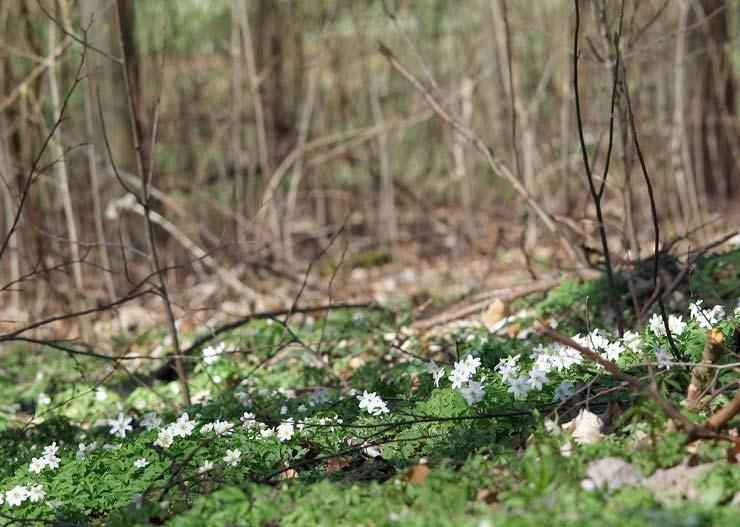 Forårets gåture i Veggerby Sogn