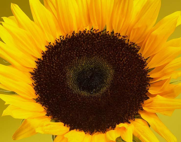 Et overflødighedshorn af blomster