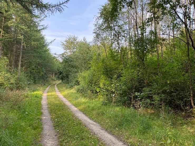 Noragerskovens-mange-dejlige-veje